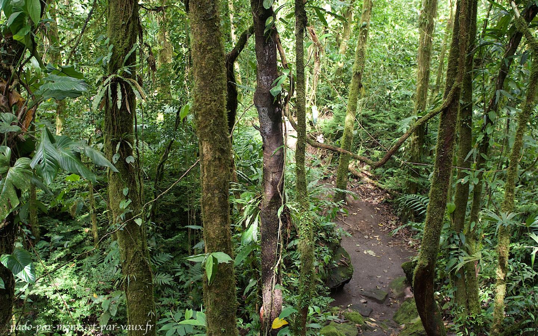 Arenal 68 - Dans la forêt