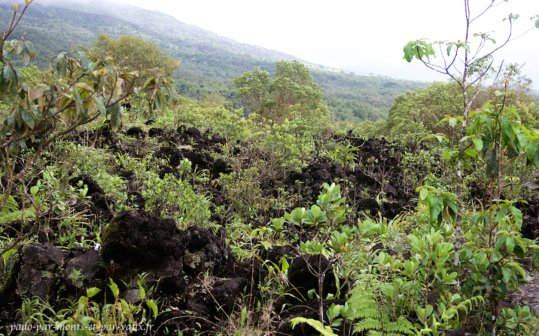 La végétation repousse sur l'ancienne coulée de lave