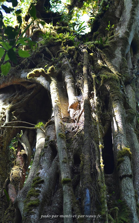 PN Monteverde - Arbre