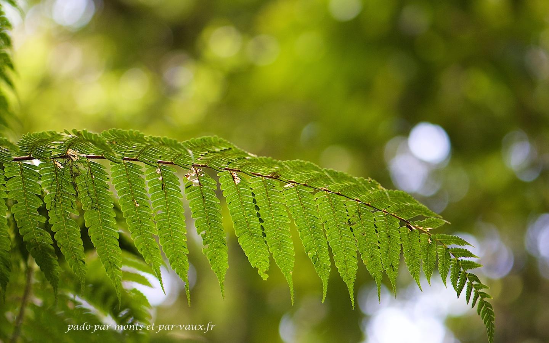 PN Monteverde
