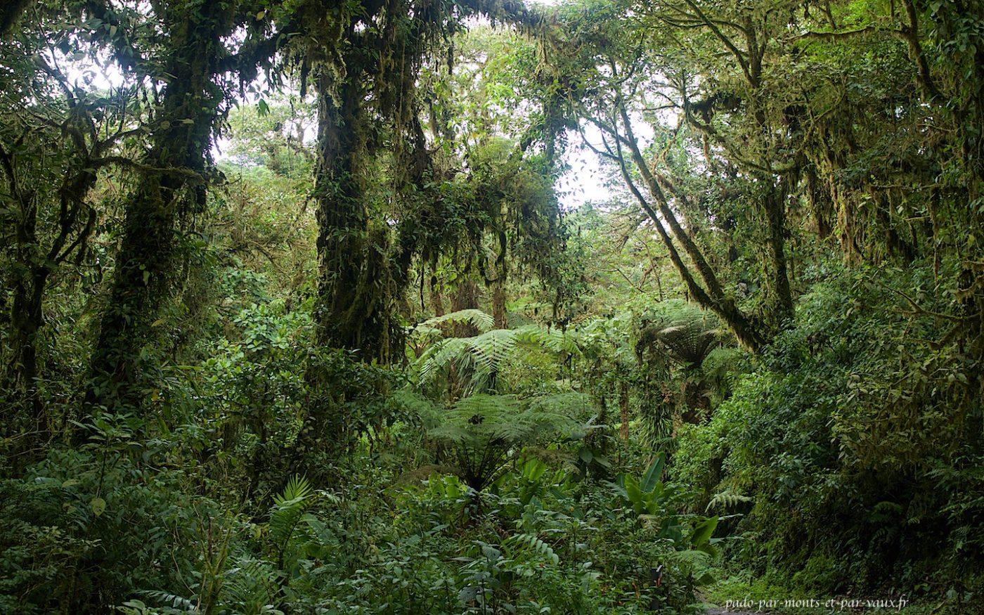 Forêt de Monteverde