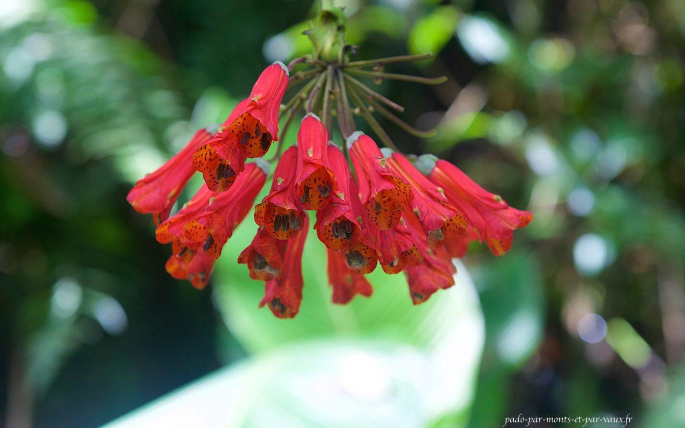 PN de Monteverde - Fleur