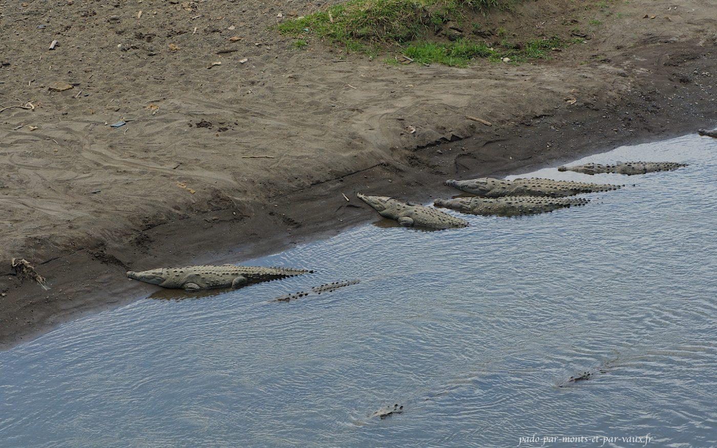 Rio Tarcolès - crocodiles