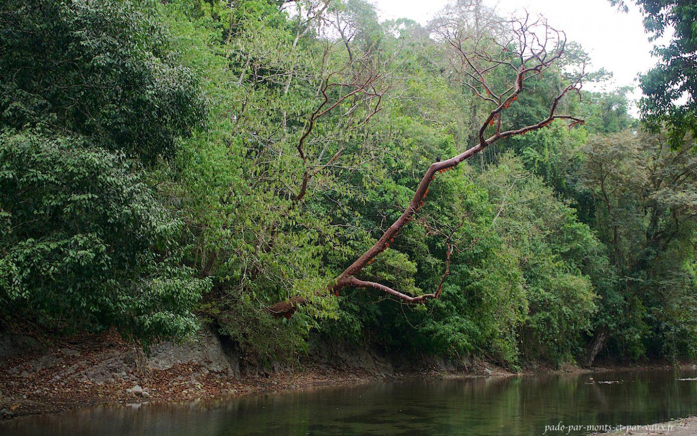Corcovado rivière