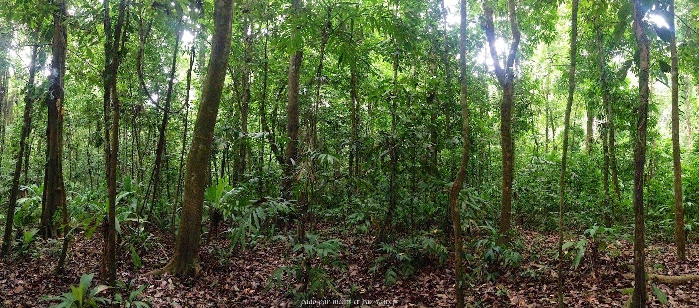 Corcovado forêt