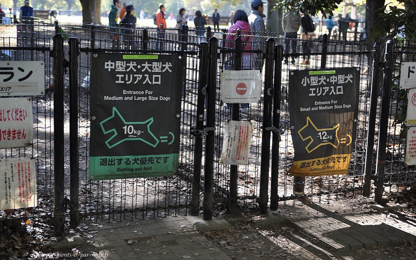 Yoyogi park zone canine