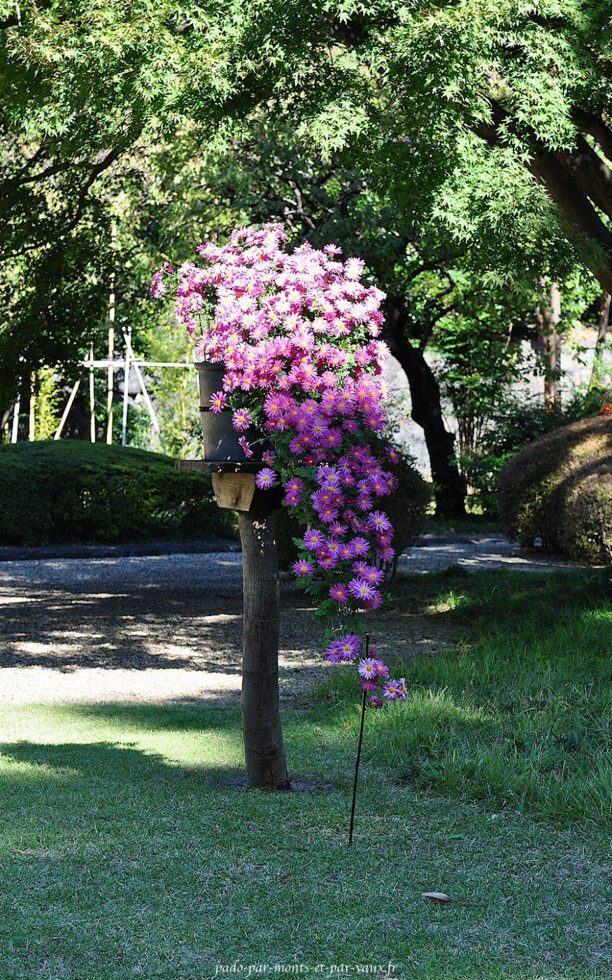 gerbe de chrysanthème