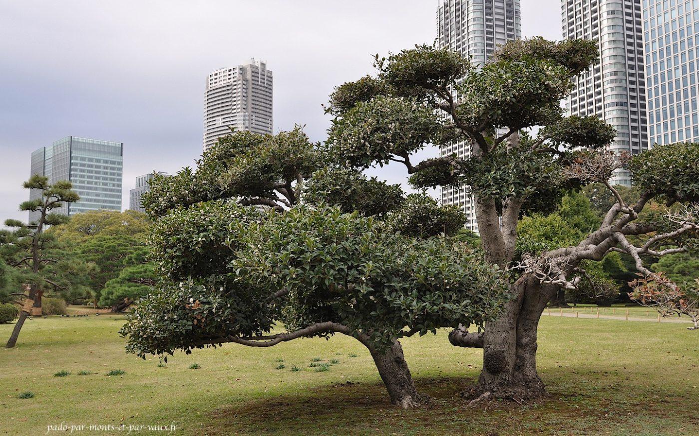 Jardin Hama-rikyu Onshi Teien