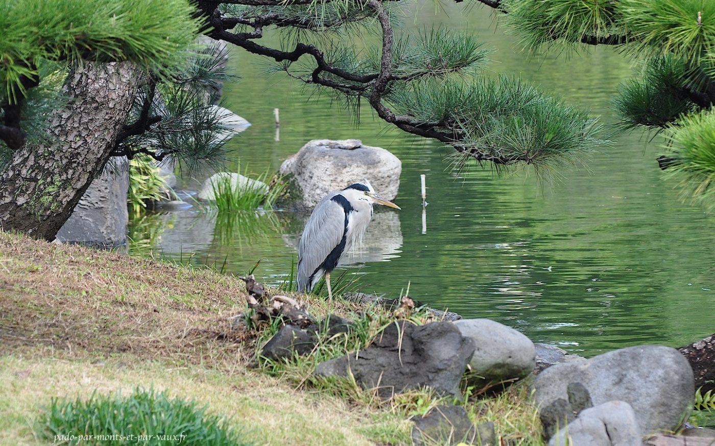 Jardins Kiyosumi Tei-en - Héron