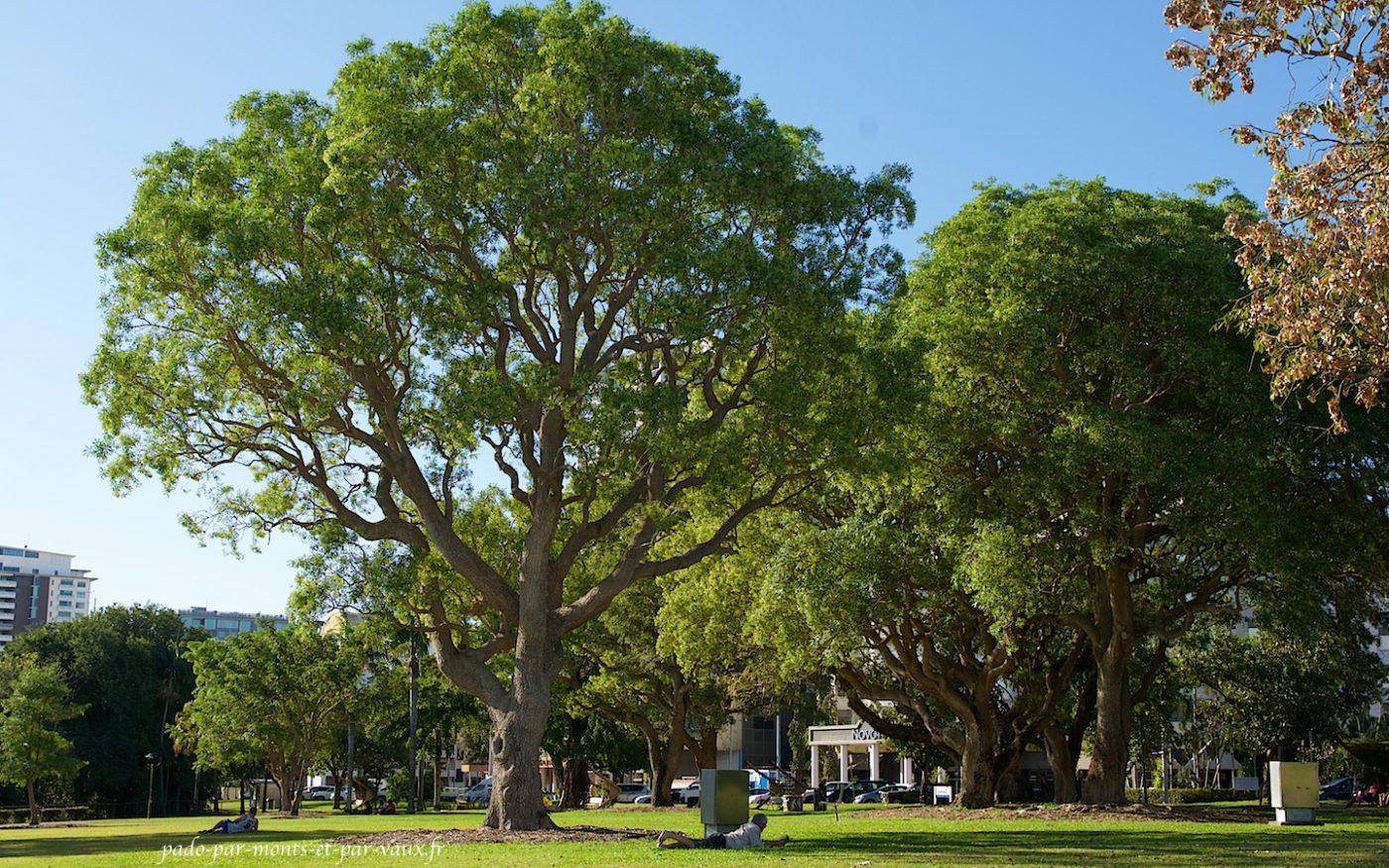 Darwin Jardins