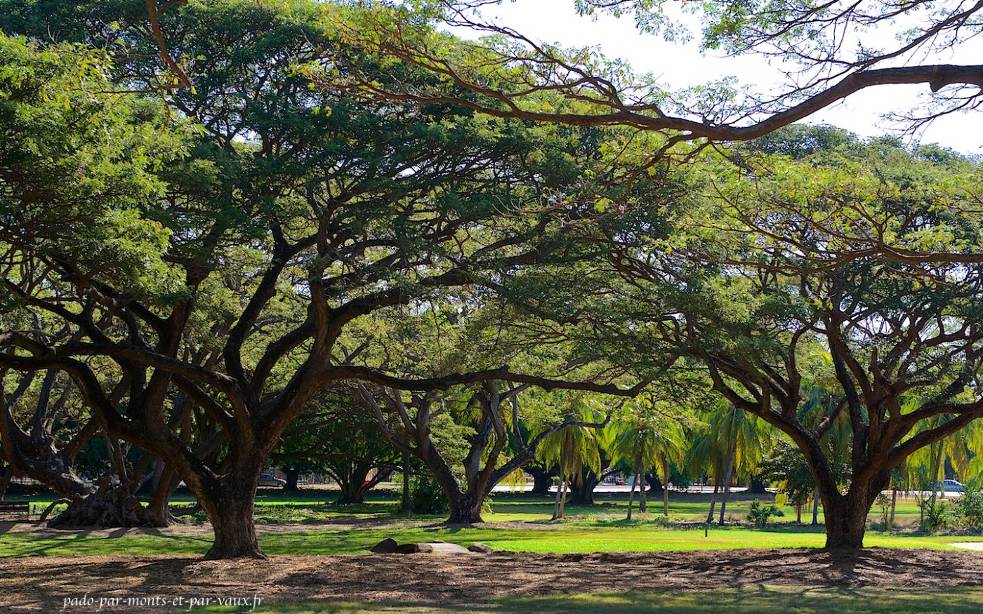 George Brown Botanic Garden