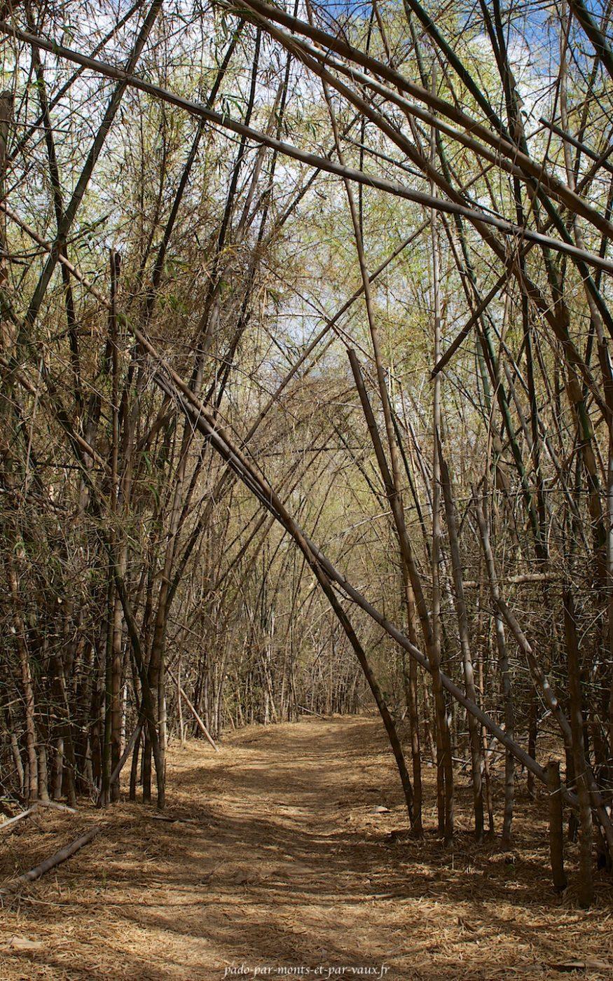 Mary River Wilderness Retreat - Bamboo walk