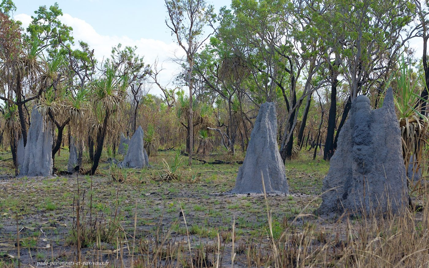 Kakadu National Park -Termitières