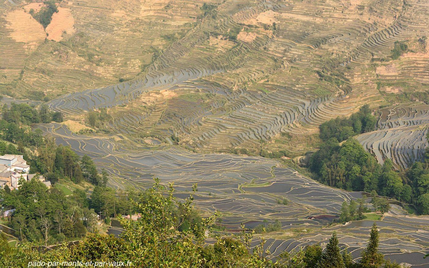 rizières de Yuanyang