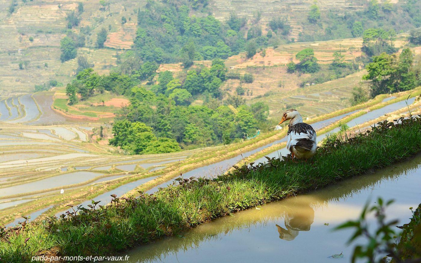 région de Yuangyang