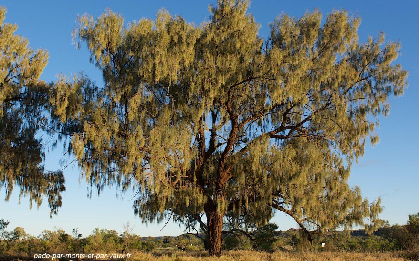 Kings creek station - desert oak