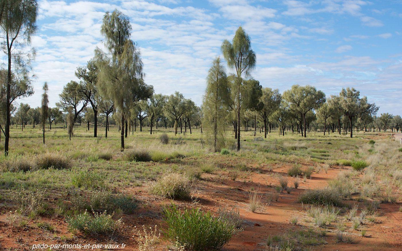 route vers Uluru