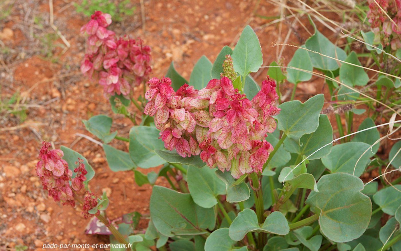Uluru - Flore