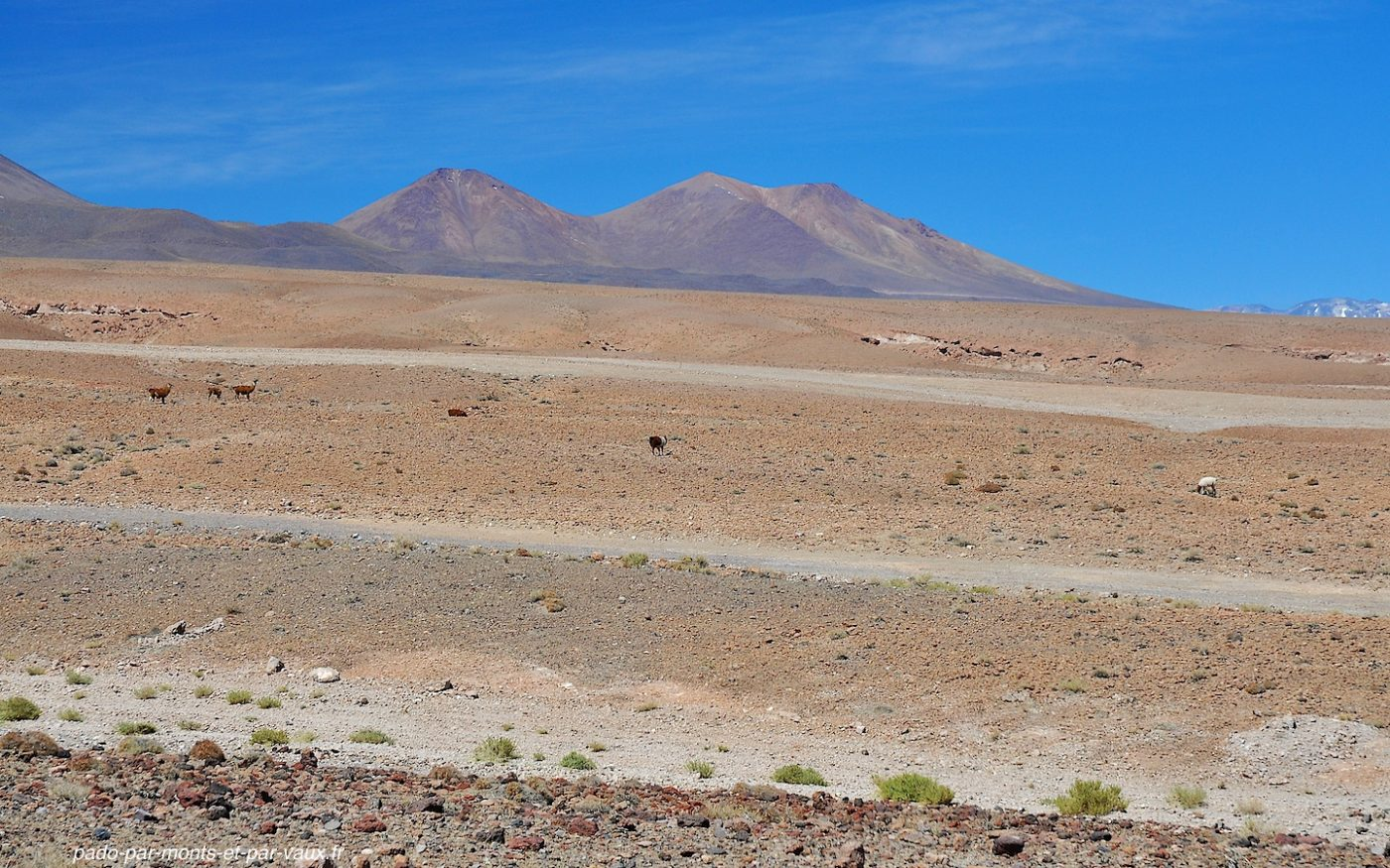 Route vers San Pedro d'Atacama
