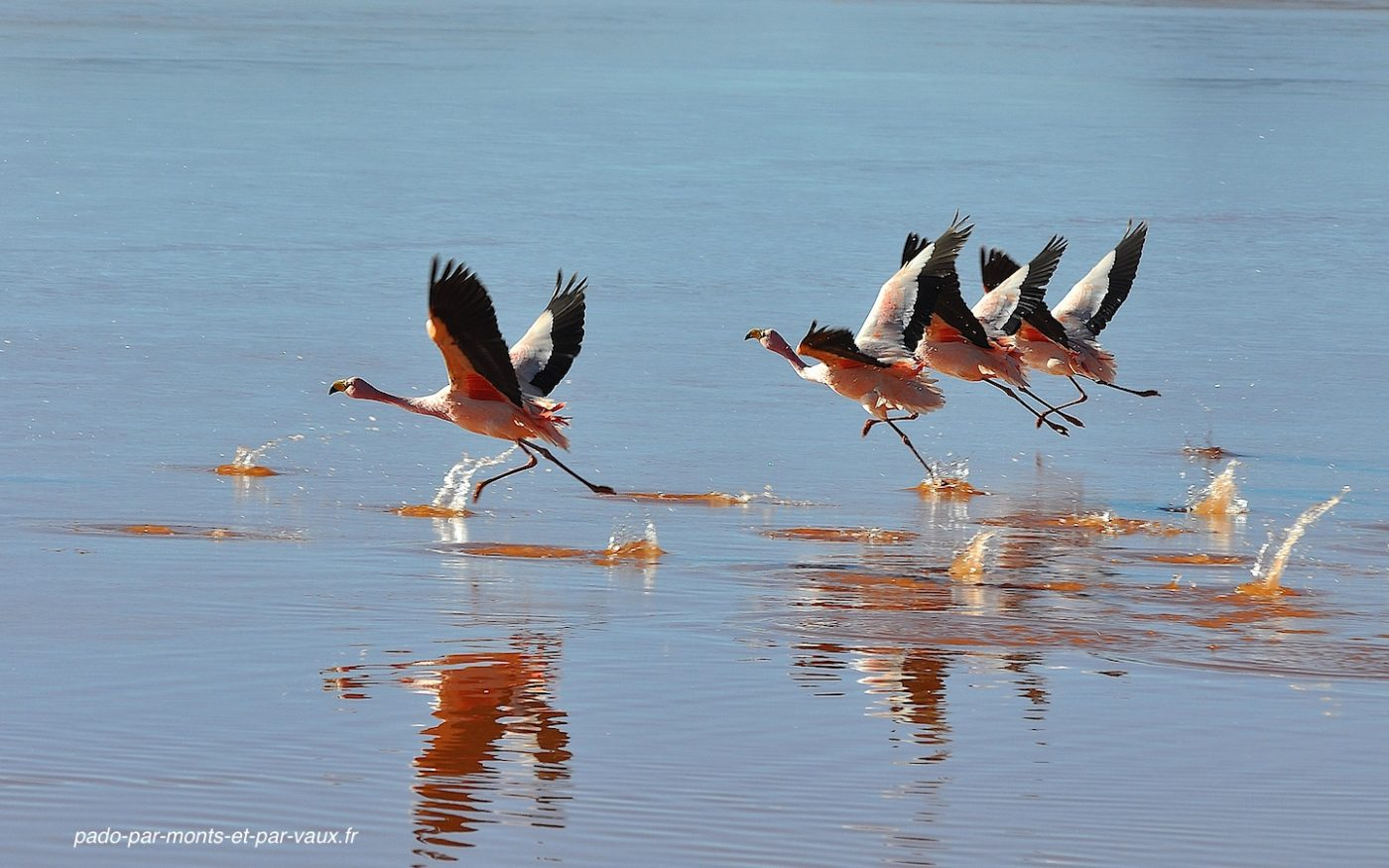 Bolivie 2011- Laguna colorada