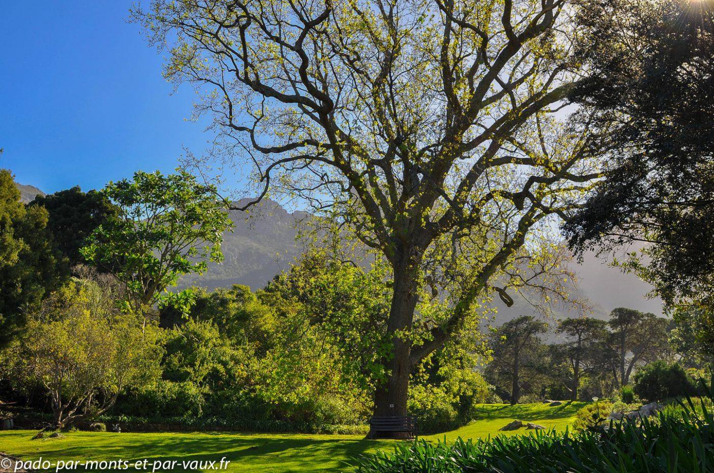 Cape Town - Kirstenbosch National Botanical Garden