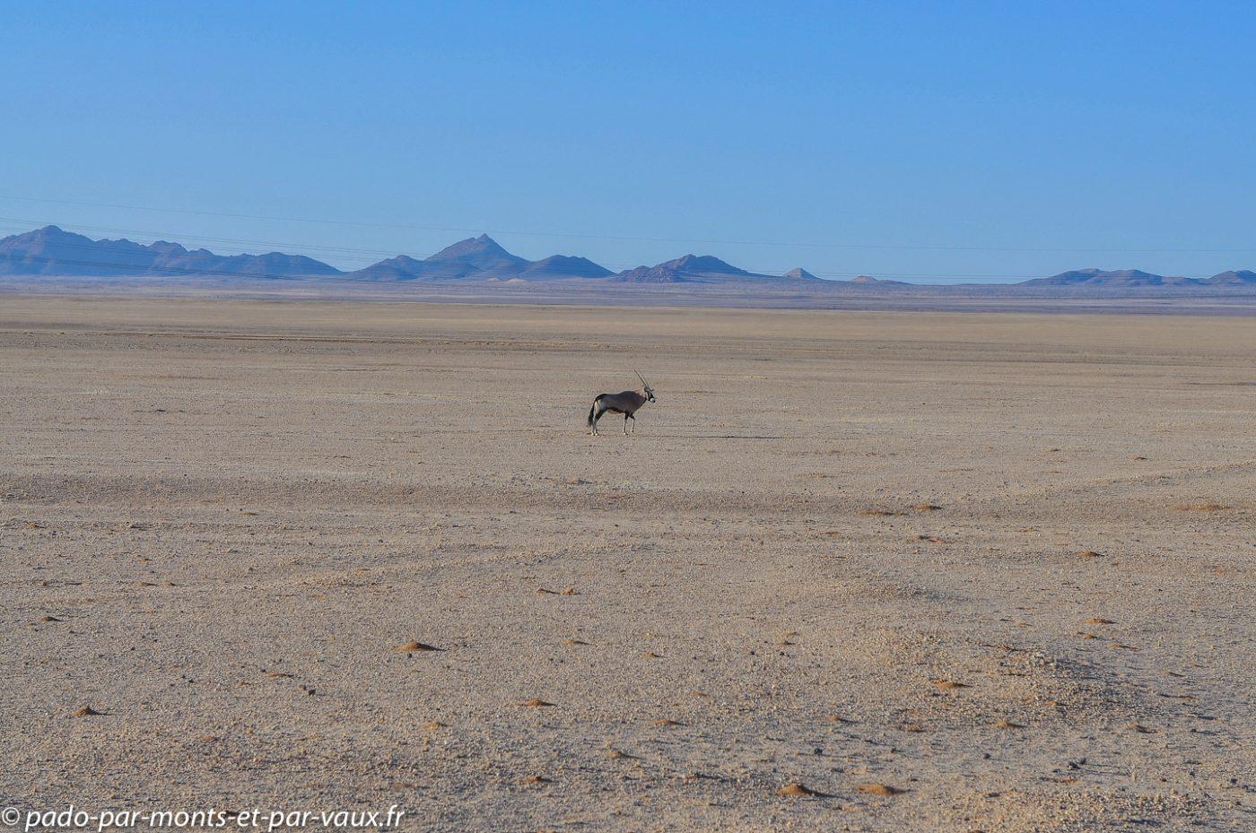 retour vers Aus - Oryx