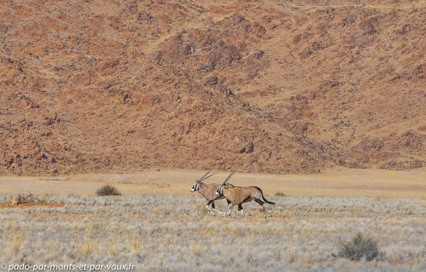 Namibie 2013 - D707 vers la Namib Rand reserve - Oryx