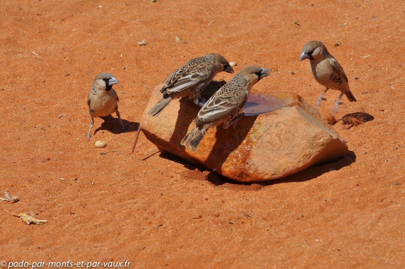 Namibie 2013 - Tok Tokkie trail - Republicains sociaux