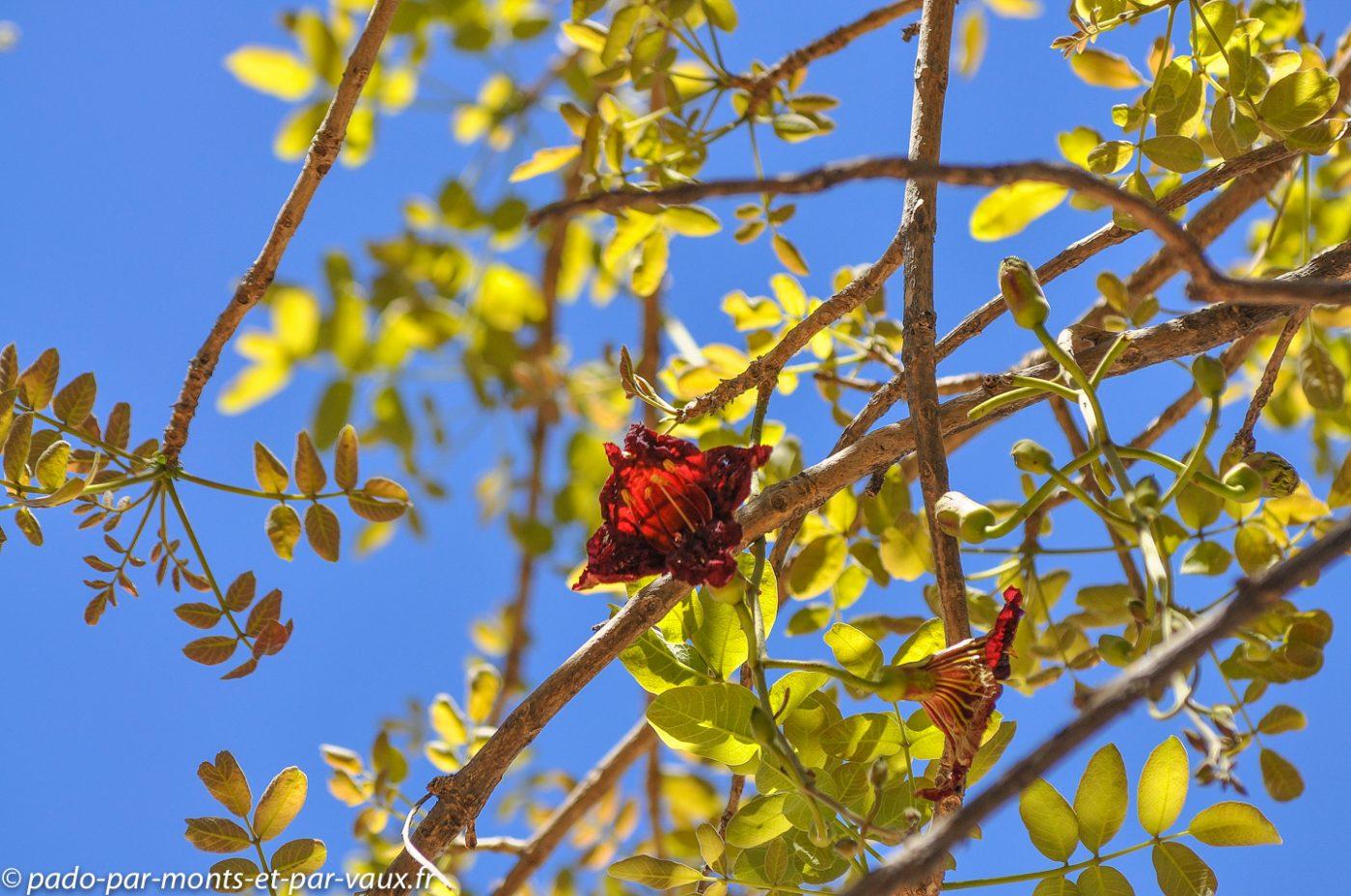 Arbres à saucisses - fleurs