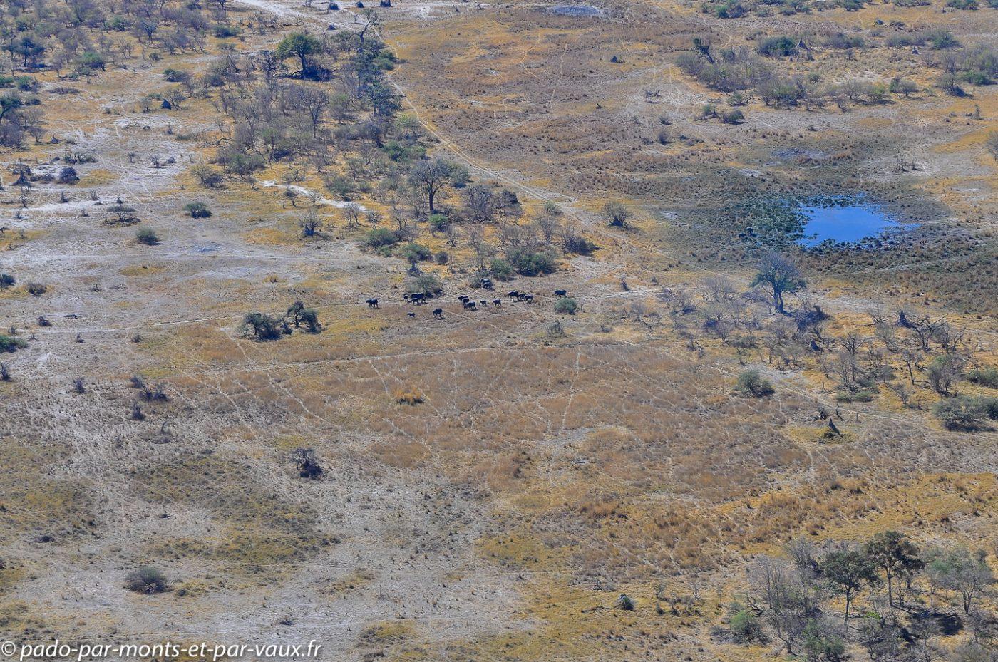 vol de Gunn's camp à Moremi - éléphants