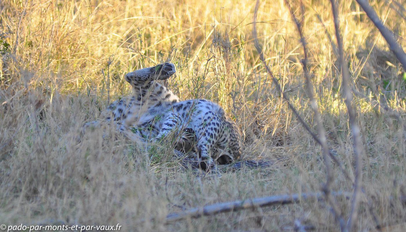 Botswana 2013 - Moremi - Leopard