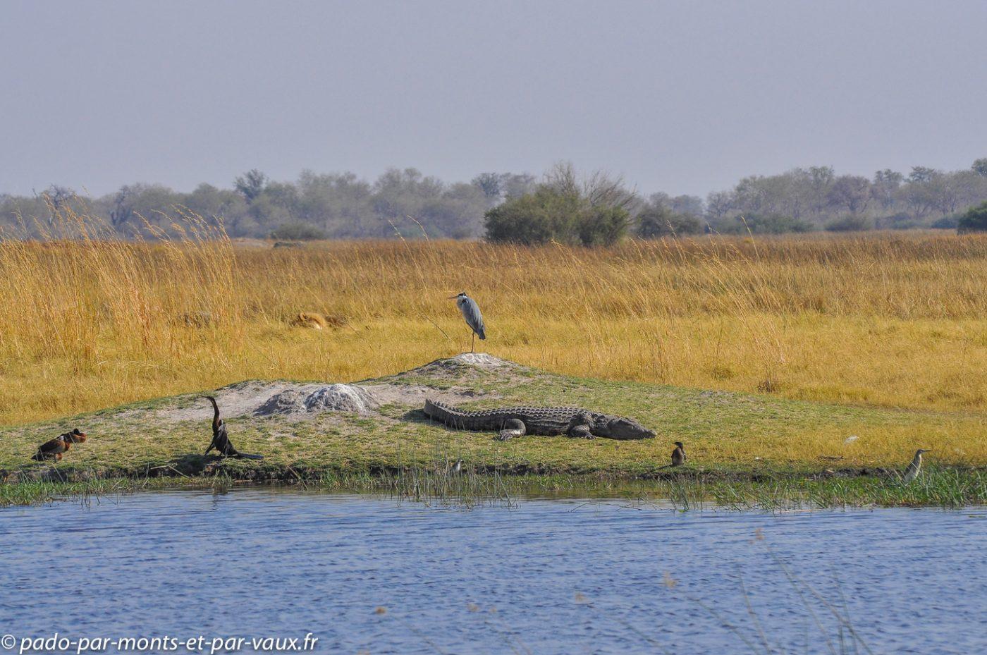 Botswana 2013 - Reserve de Moremi