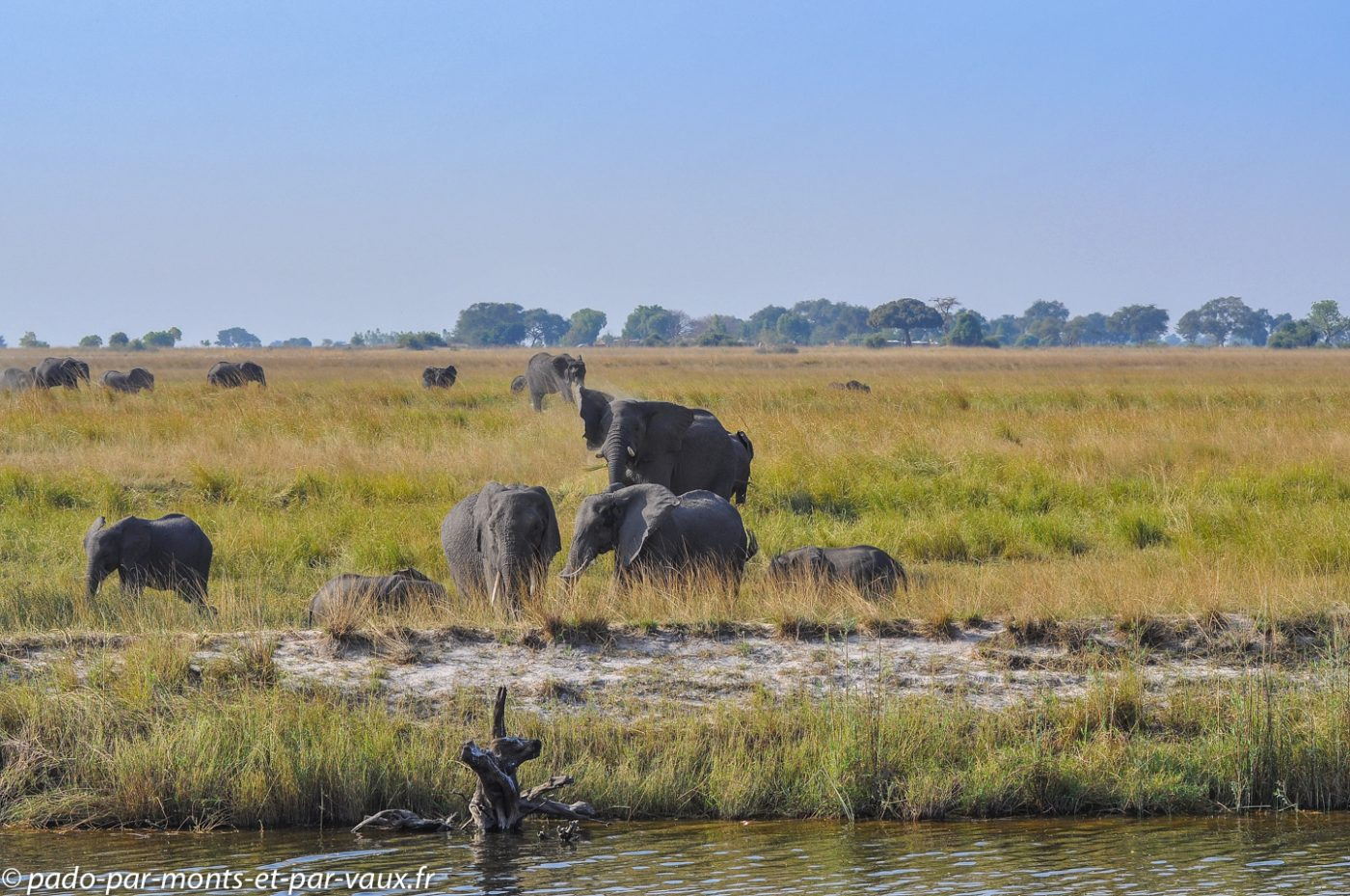Rivière Chobe - Elephants