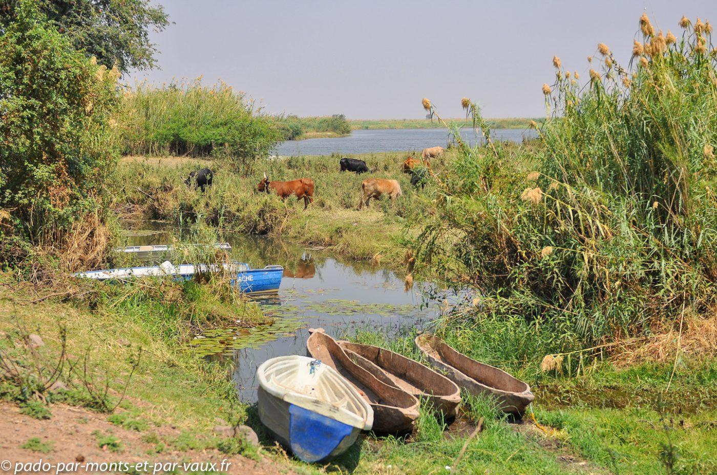 Rivière Chobe côté namibien