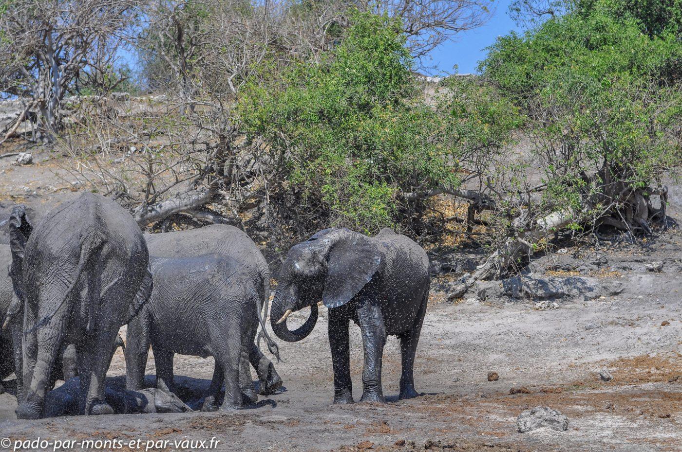 2013-  Riviere Chobe - Elephant