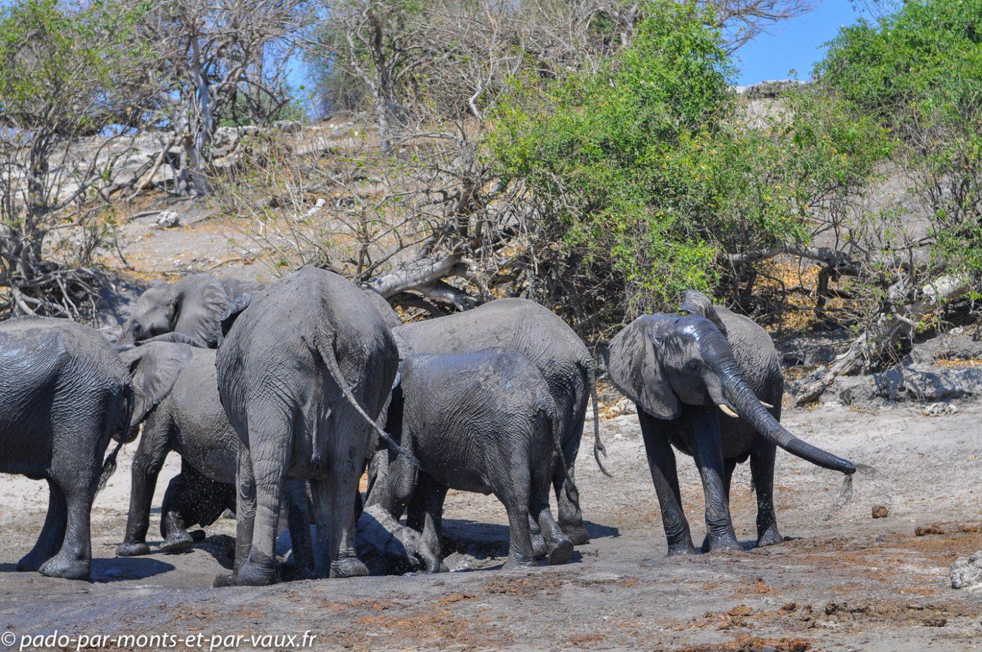 2013- Riviere Chobe - Elephants
