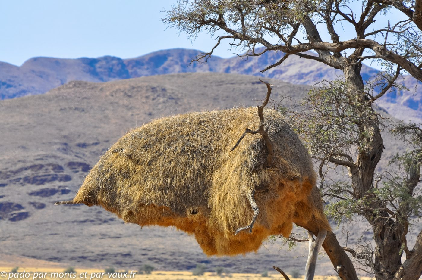 Namibie 2013 - nid de républicains sociaux