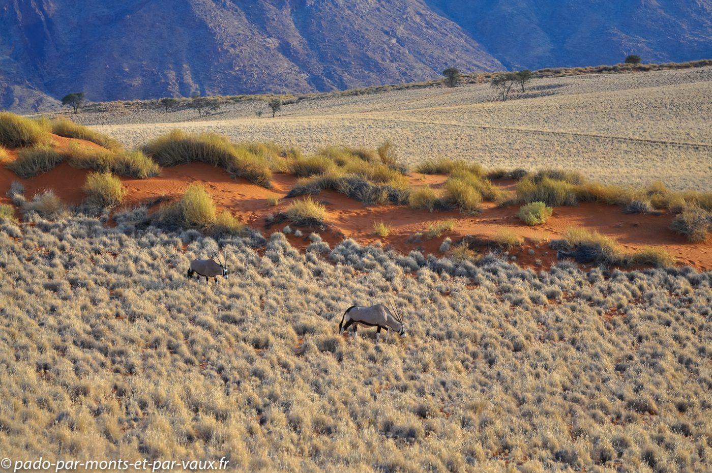 Namibie 2013 - Tok Tokkie trail