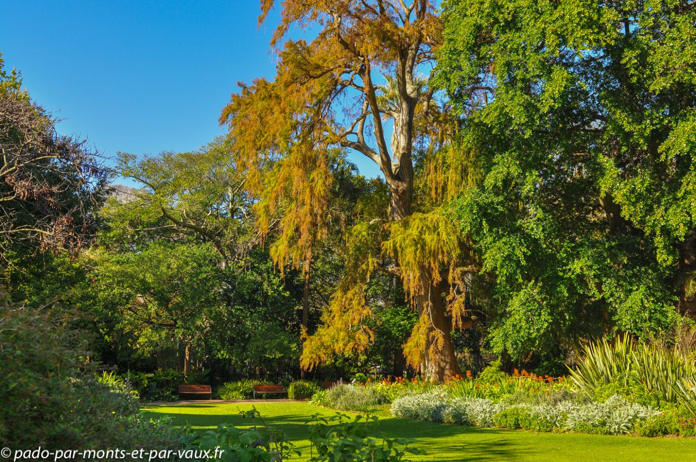 Jardin botanique municipal