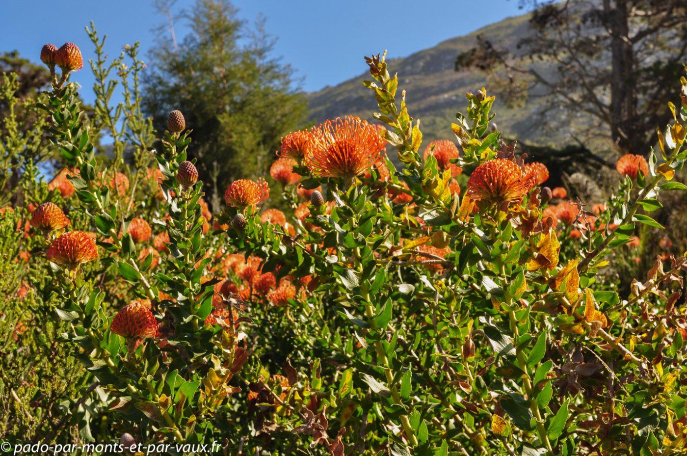Cape Town - Kirstenbosch Garden