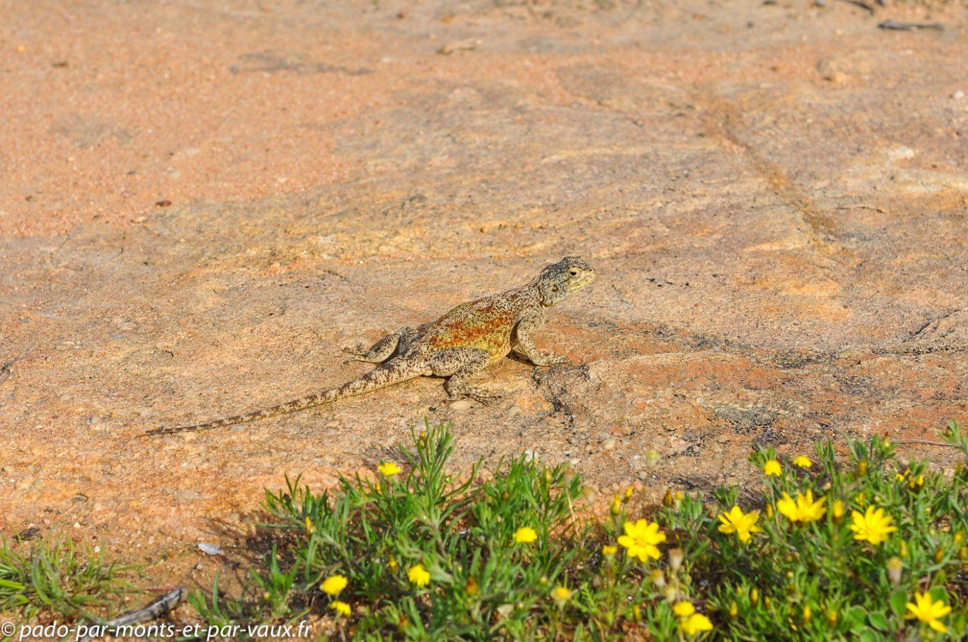 Afrique du Sud 2013 - Cederberg - Sevilla Trail