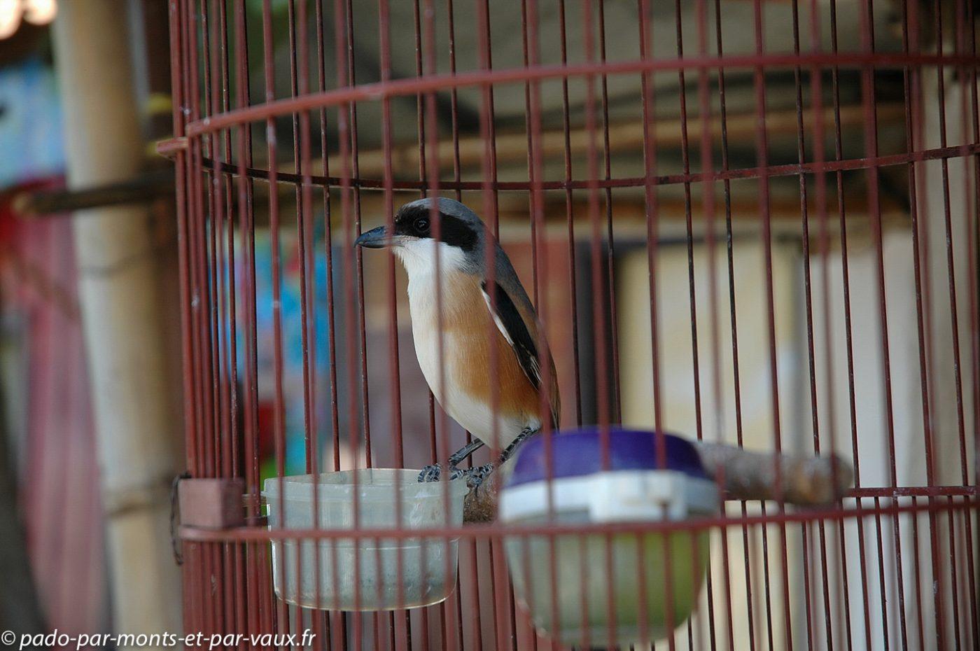 Marché aux oiseaux