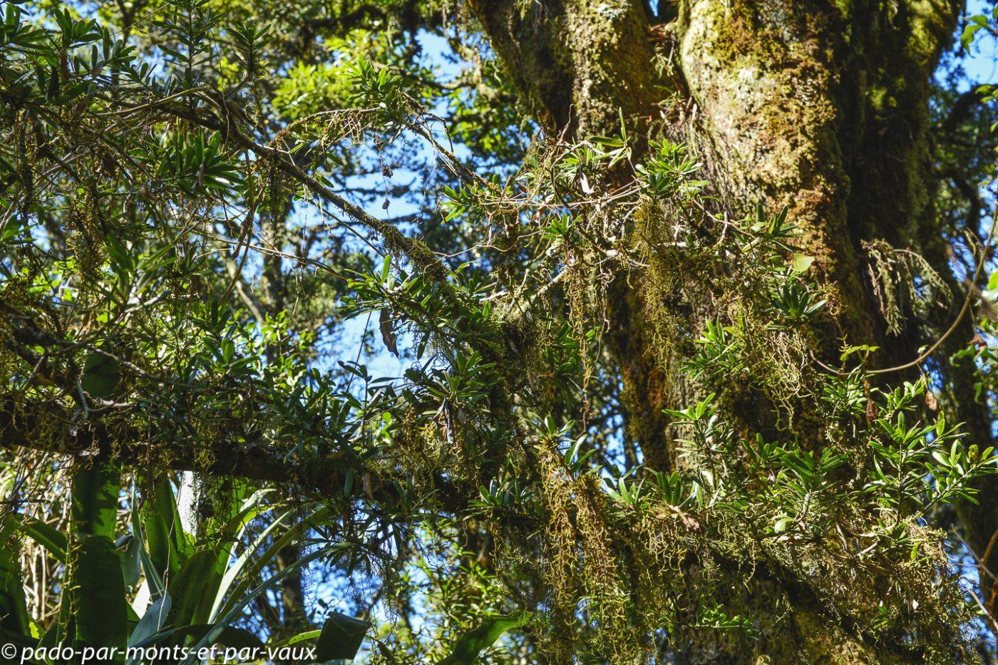 Gods window et rainforest