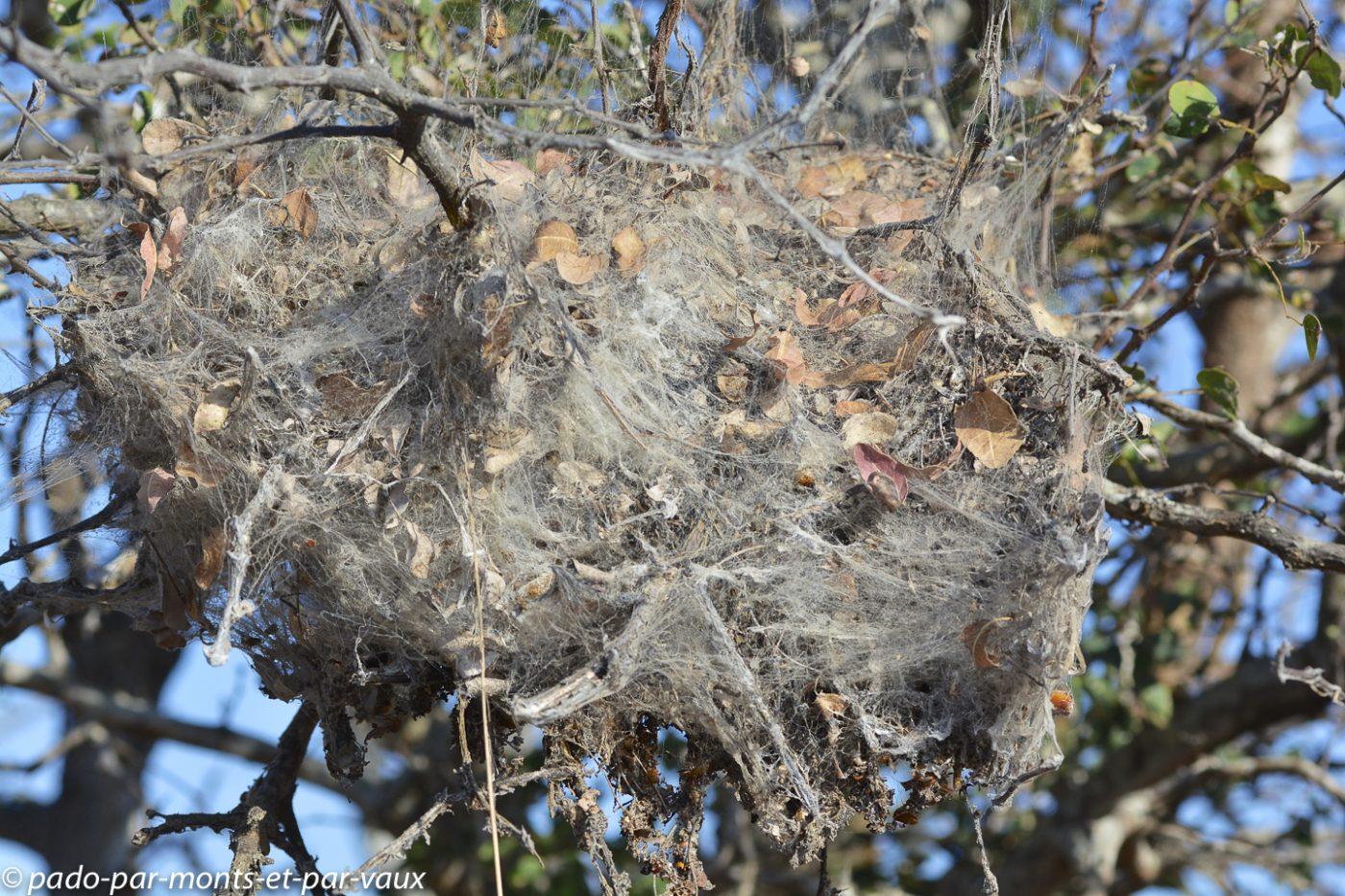 Nid d'araignées sociales