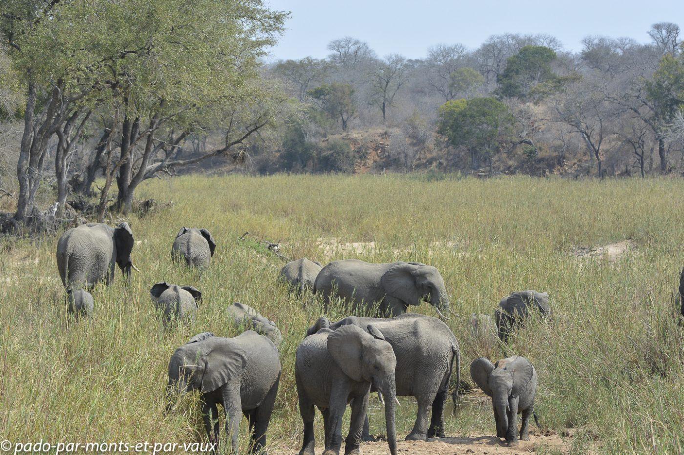 Krüger - Eléphants