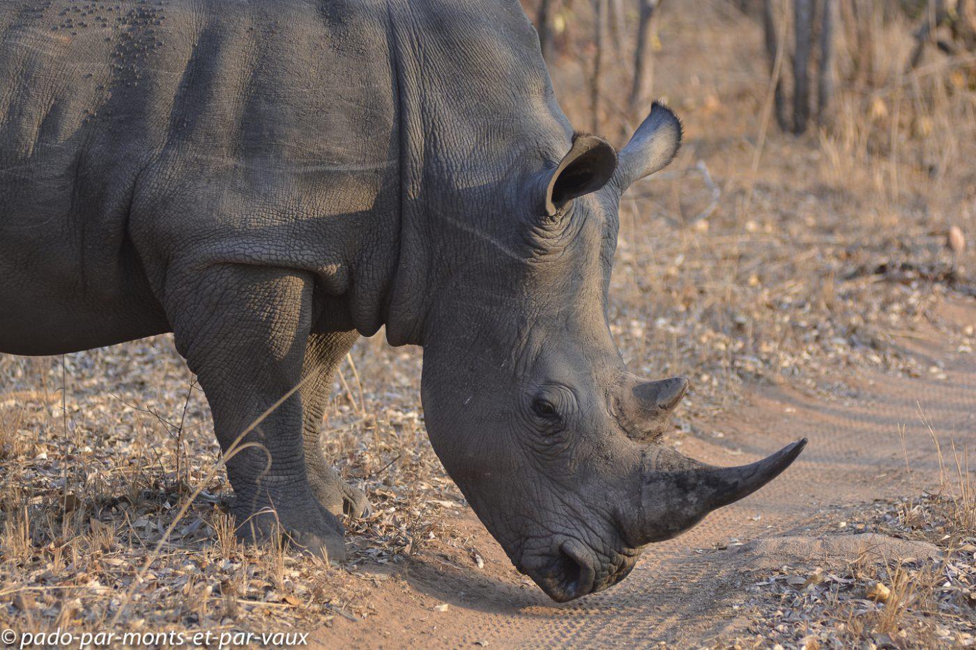 Ulusaba - Rhinocéros