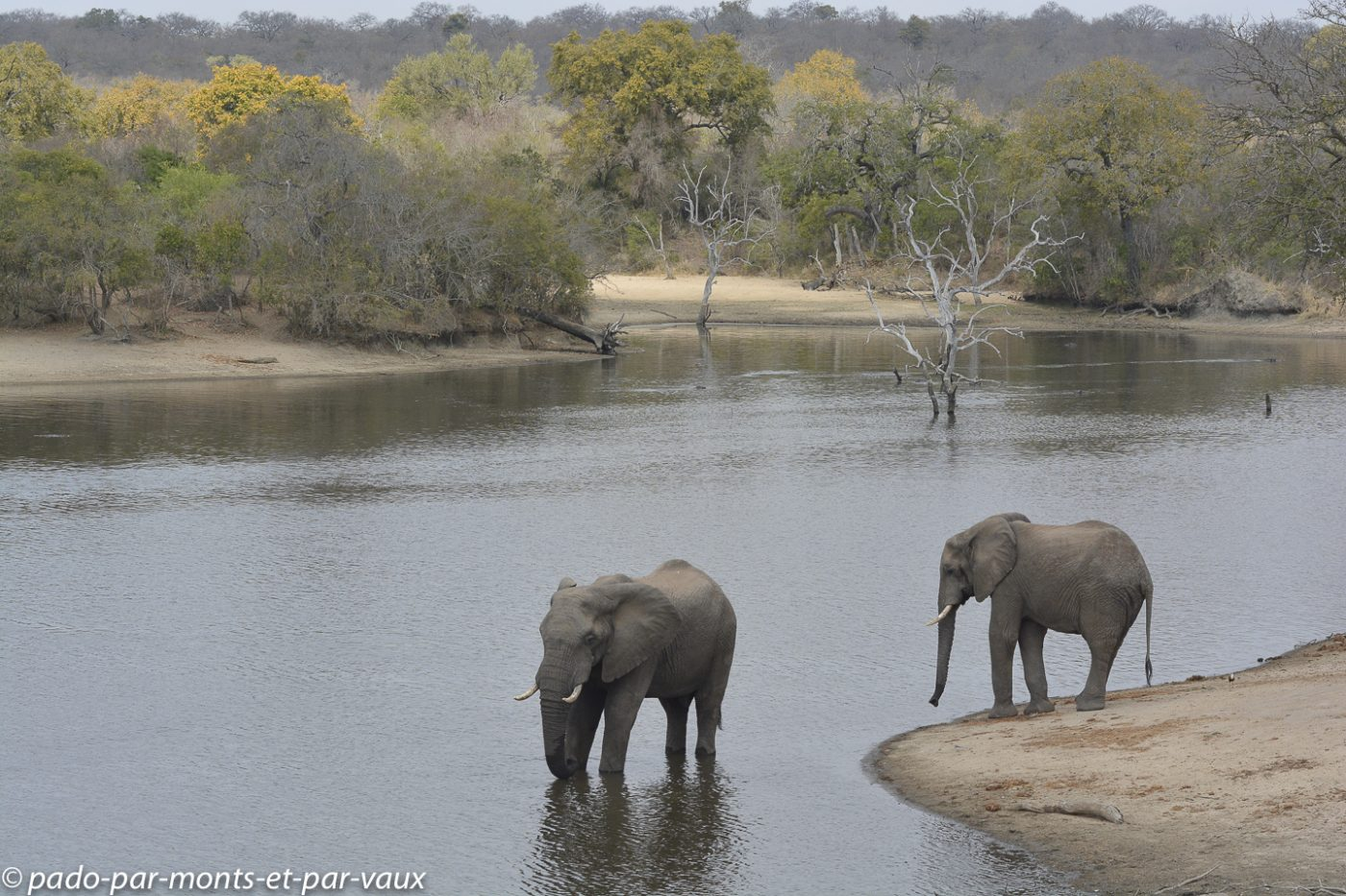 Ulusaba - Elephants