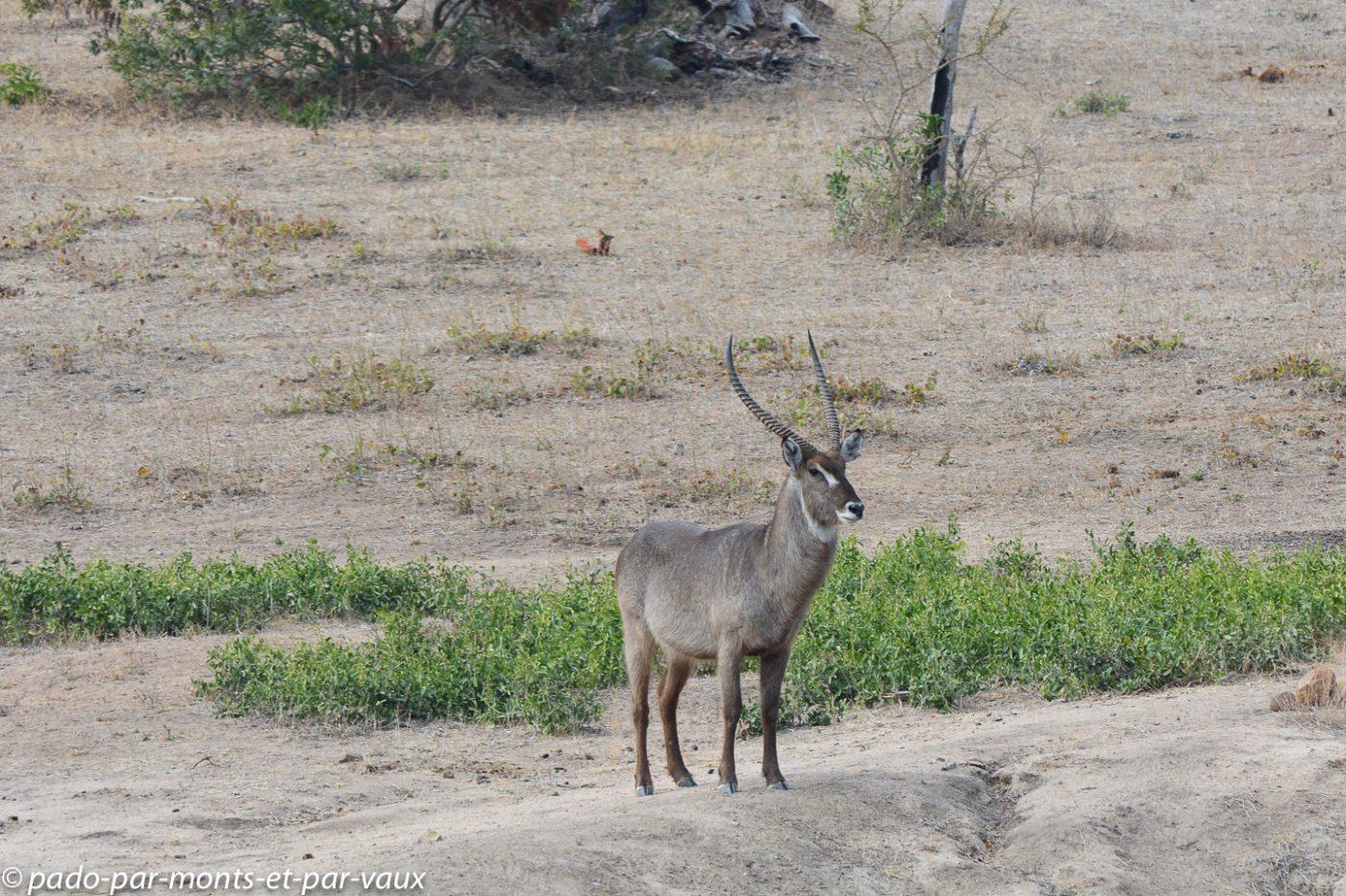 Kruger - Cobe à croissant