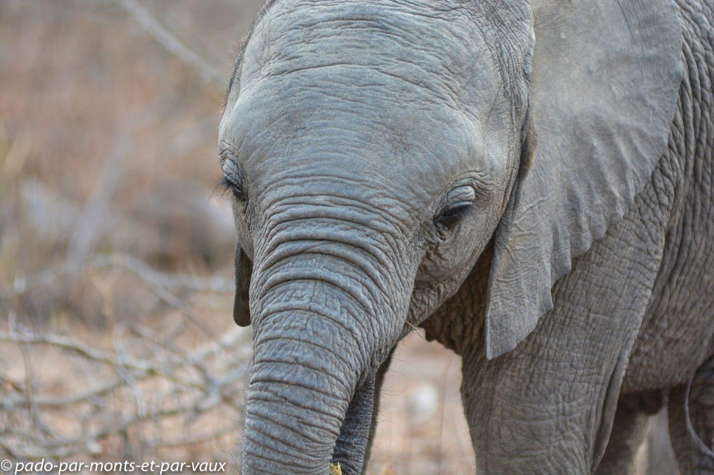 Ulusaba - éléphants