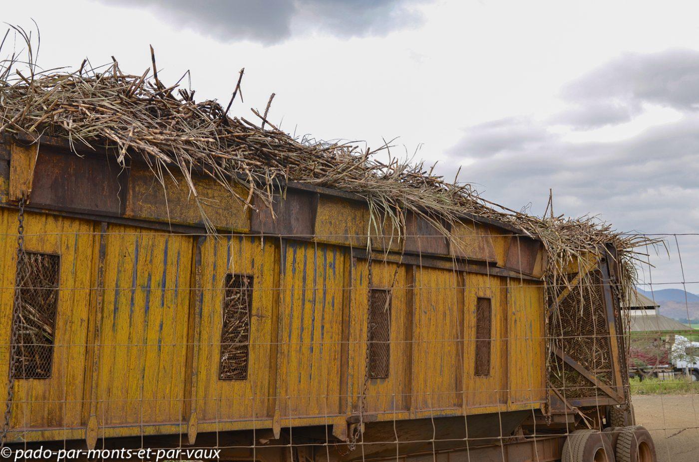 Swaziland - cannes à sucre
